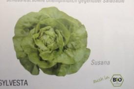SalataSuzana100semki